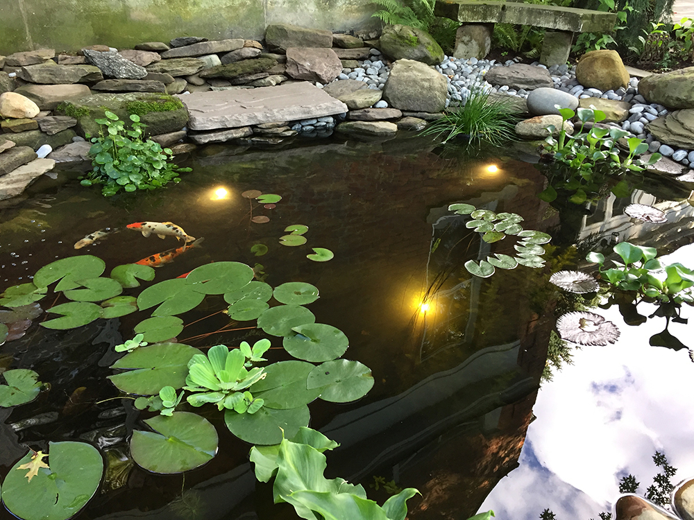 Ponds water features absolute precision landscape supply for Koi pool opening times